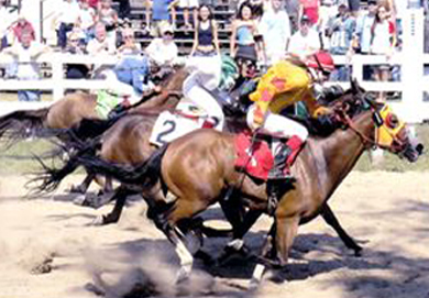 Types Of Horse Races Horse Race Types Thoroughbred Quarter Horse
