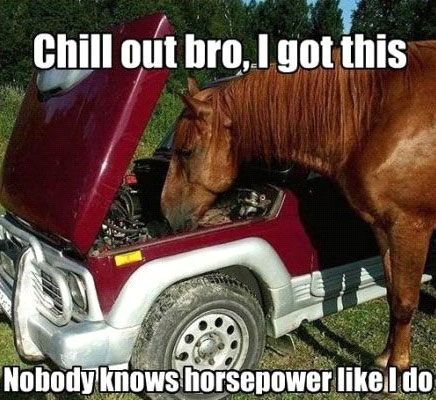Nobody Knows Horse Power