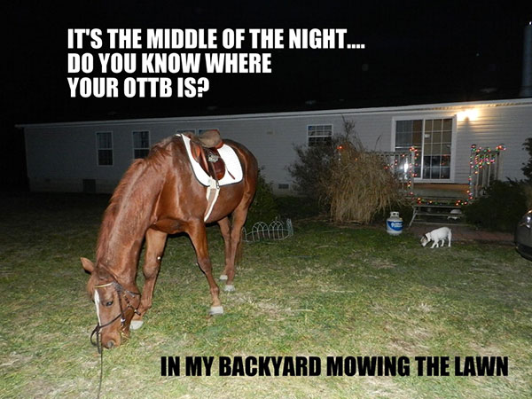 OTTB Mowing the Lawn